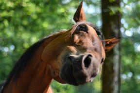 horse-3555391_640