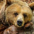 верующий медведь
