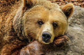 bear-838688_640