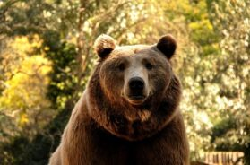 bear-3775661_640