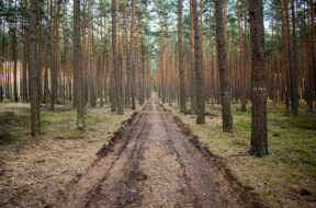 forest-3543084_640